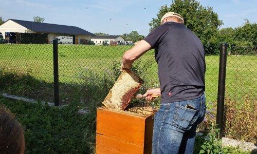 Der Imker öffnete einen Bienenkasten und zeigte uns einen Rahmen mit Waben